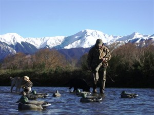 new zealand duck hunting.jpg