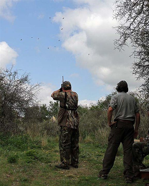 argentina%20dove%20hunting%20ms2704_500x625
