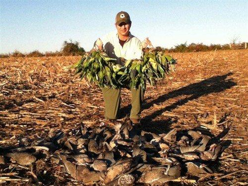 argentina%20pigeon%20hunting%20parakeets%20la%20paz1876_500x375