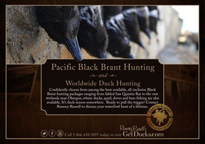 Pacific Black Brant Hunting