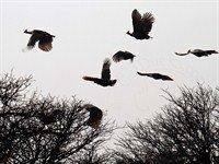 africa bird hunting 2126_200x150