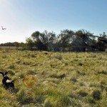 Rio Salado Argentina Perdiz Hunting