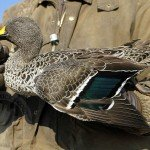 South Africa Duck Hunting
