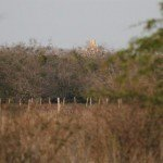 Mexico Ocellated Turkey Hunting