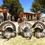 Gould's Turkey Hunting