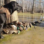 mississippiduckhunting_326166