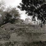 Ocellated Turkey Hunting Edzna Ruins
