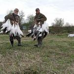 Spring Snow Goose Hunting in Quebec Canada