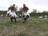 Spring Snow Goose Hunting in Quebec Canada