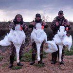 north Carolina swan hunting