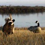 canada goose hunting in Manitoba