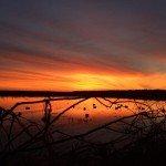 arkansas duck hunting commander's corner 817931384657195600_n
