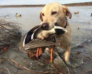 arkansas duck hunting_0595
