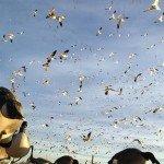 colorado goose hunting lass pass outfit 12345987