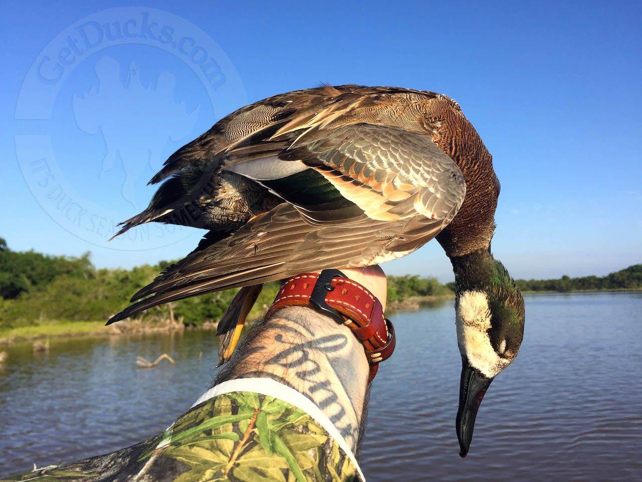 mexico duck hunting mazatlan
