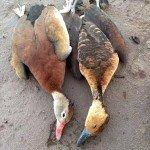 Obregon Mexico Duck Hunting