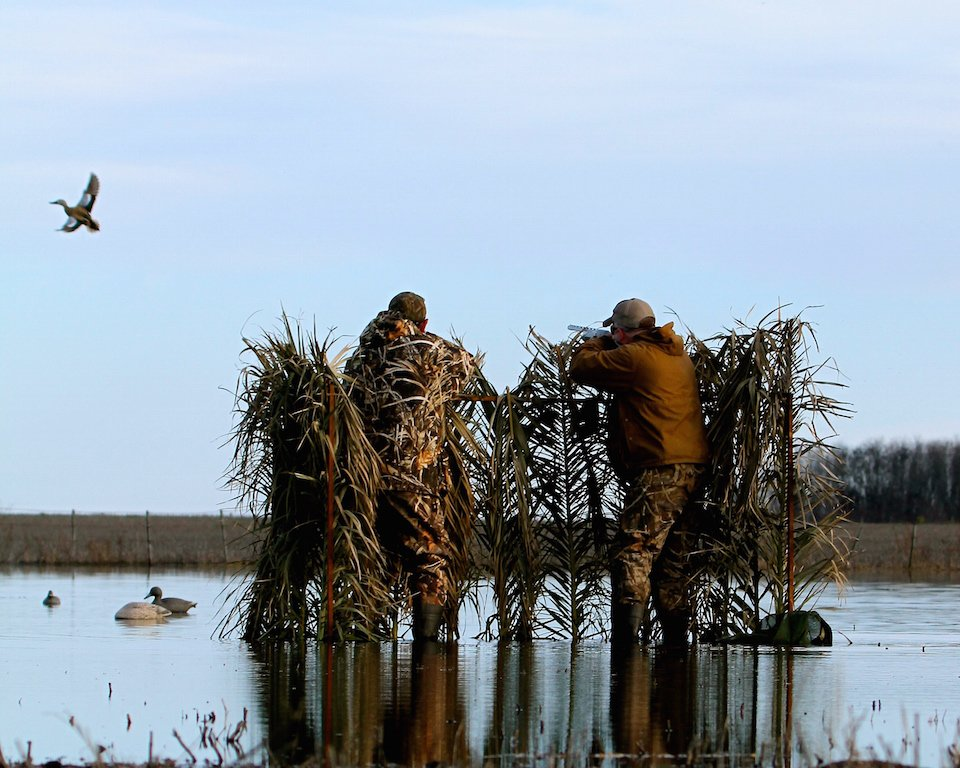 argentina duck hunting