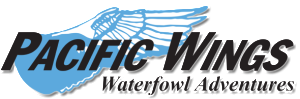 pacific wings waterfowl adventures