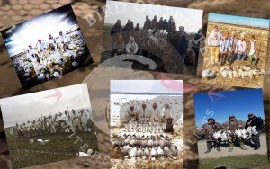 spring snow goose hunting guide