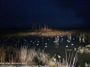 washington duck hunting guide