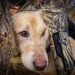 TEXAS DUCK HUNTING GUIDE_2060