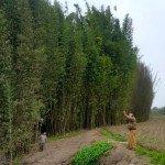 peru dove hunting_7293