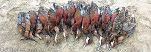 duck hunting in peru