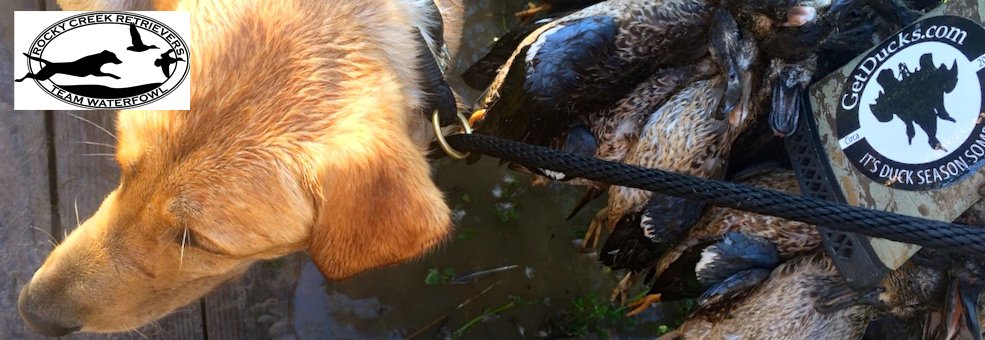 Texas Teal Hunting