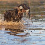 texas teal hunting_7966