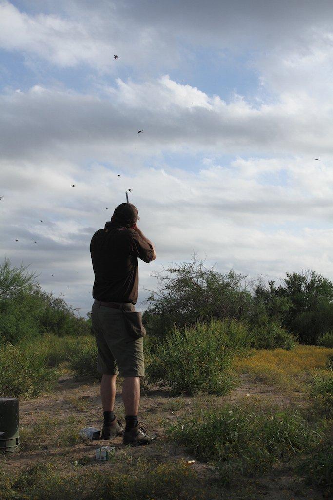 mexico white wing dove hunt