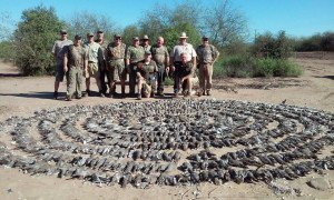 mexico dove hunting_8121