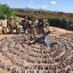 white winged dove hunt in mexico