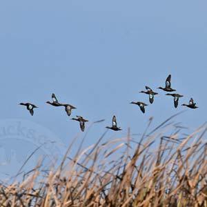 Peru Duck Hunt