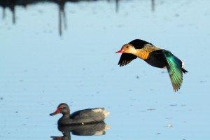 argentna duck hunt_8193 2