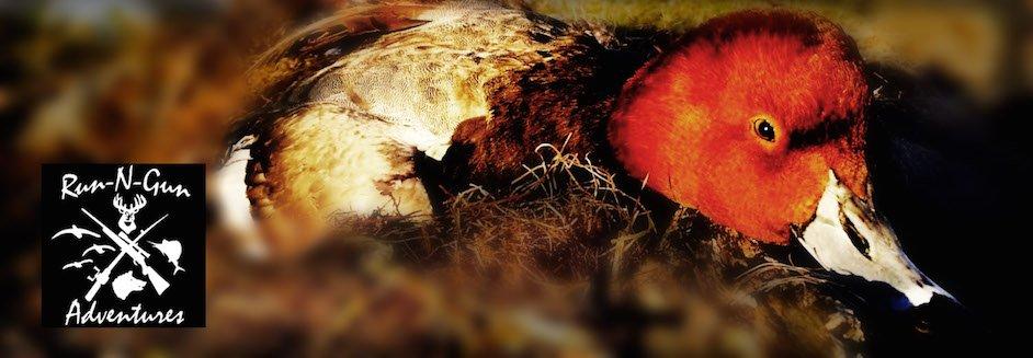 Texas Redhead Hunting
