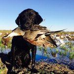 texas pintail hunting 789840982