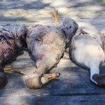 Louisiana Goose Hunting-17