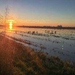 Louisiana Goose Hunting-4
