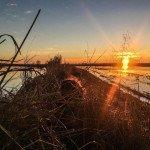 Louisiana Goose Hunting-7