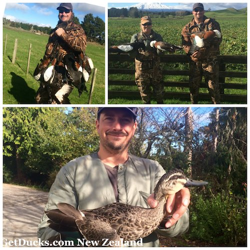 duck hunting in new zealand