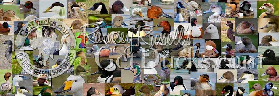 world waterfowl species