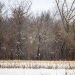 missouri-duck-hunting-dw-east-field1
