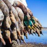 missouri-duck-hunting-death-valley-kill