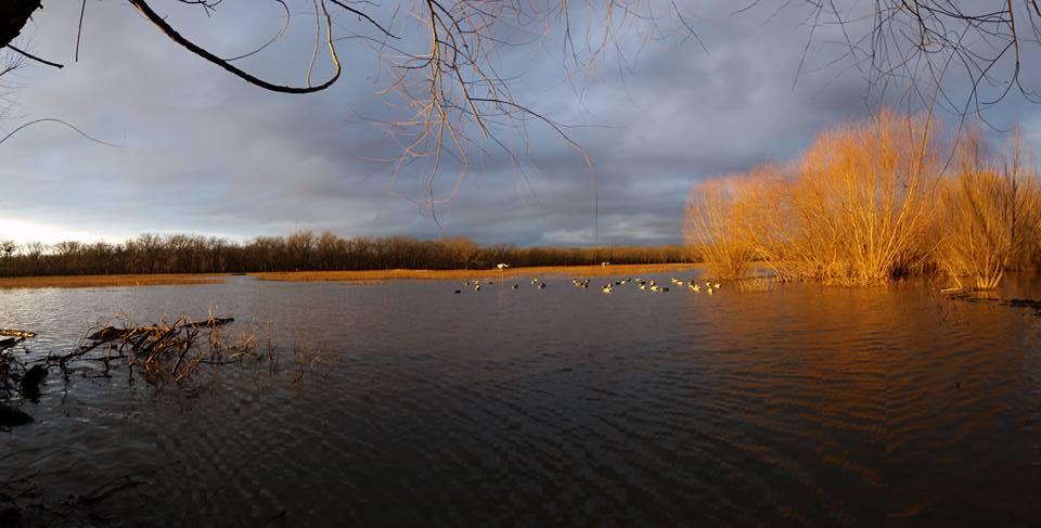 missouri-duck-hunting-pecan-marsh