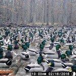 missouri-duck-hunting_0258