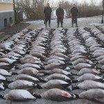 Sweden Goose Hunting