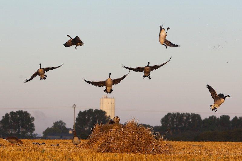 sweden-goose-hunting-ea9f3800-1-1