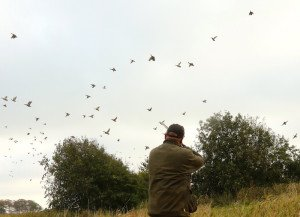 sweden duck hunting