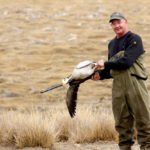 bar-headed goose hunting in mongolia