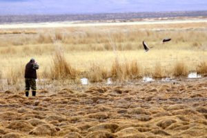 goose hunting mongolia